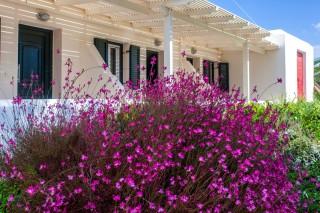 dimitra flowers naxos